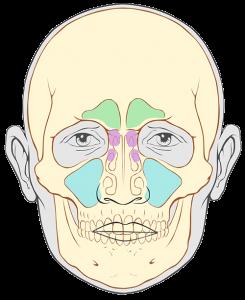 sinusuri paranazale - dr ioan bulescu